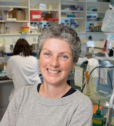Prof. Rosemary O'Connor